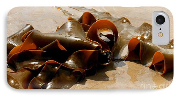 Bull Kelp IPhone Case by Lexa Harpell