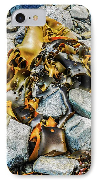 Bull Kelp On Blue Rocks IPhone Case by Lexa Harpell