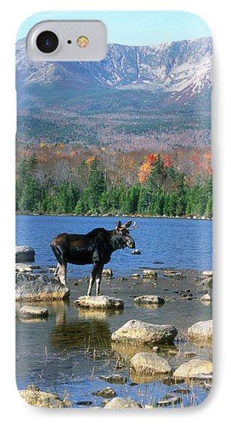 Bull Moose Below Mount Katahdin Phone Case by John Burk