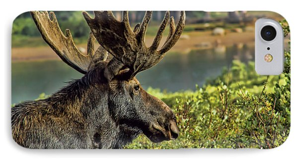 Bull Moose IPhone Case by Steven Parker