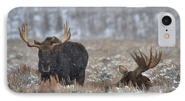 IPhone Case featuring the photograph Bull Moose Winter Wandering by Adam Jewell
