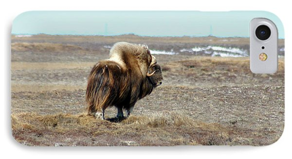 Bull Musk Ox IPhone Case by Anthony Jones