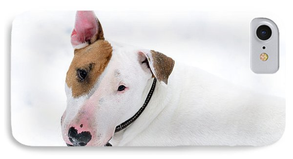 Bull Terrier IPhone Case