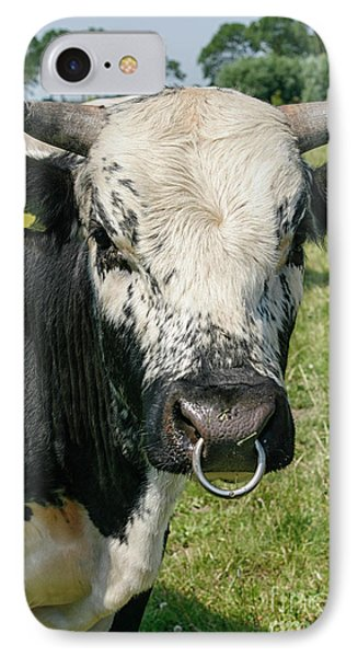 IPhone Case featuring the photograph Bull With Snout Ring by Patricia Hofmeester