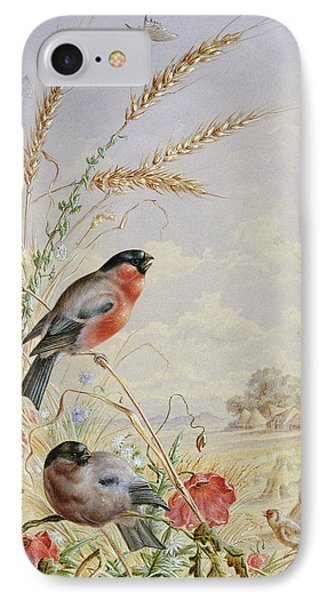 Bullfinches In A Harvest Field IPhone 7 Case