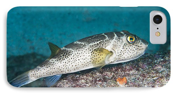 Bullseye Puffer - Galapagos Phone Case by Dave Fleetham - Printscapes
