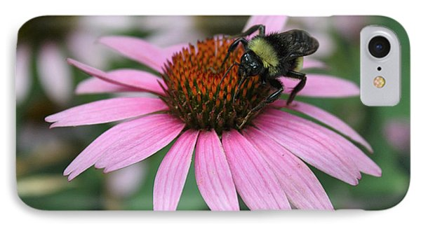 Bumble Bee On Pink Cone Flower IPhone Case by Sheila Brown