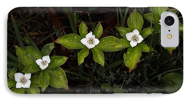 Bunchberry Flowers IPhone Case