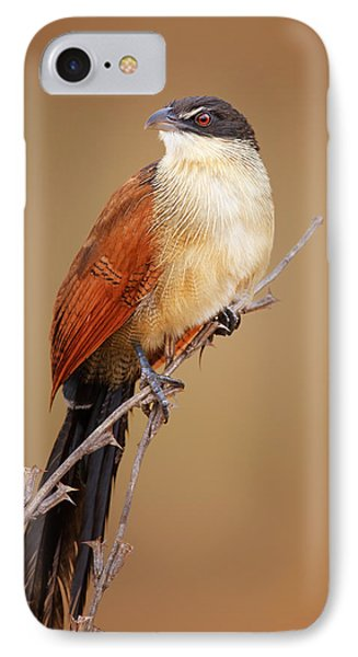 Burchell's Coucal - Rainbird IPhone Case by Johan Swanepoel