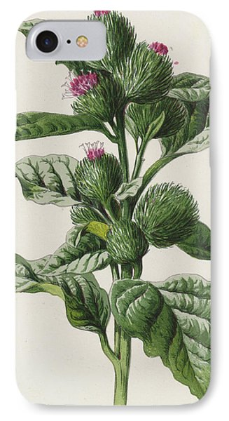 Burdock IPhone Case by Frederick Edward Hulme