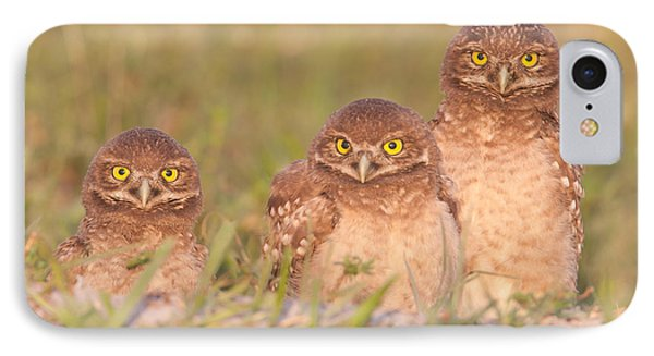 Burrowing Owl Siblings IPhone Case by Clarence Holmes