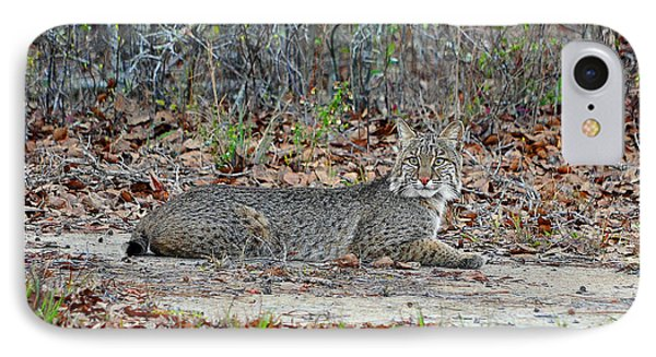 IPhone Case featuring the photograph Bushed Bobcat by Al Powell Photography USA