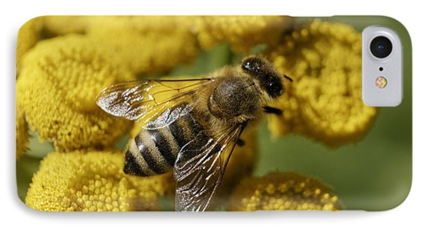 Busy Honey Bee IPhone Case by John  Mitchell