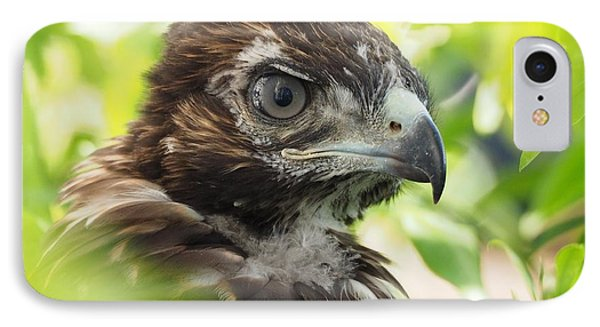 Buteo Jamaicensis IPhone Case