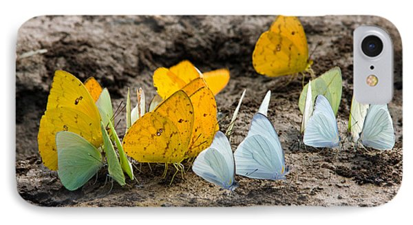 Butterflies Eating Minerals IPhone Case