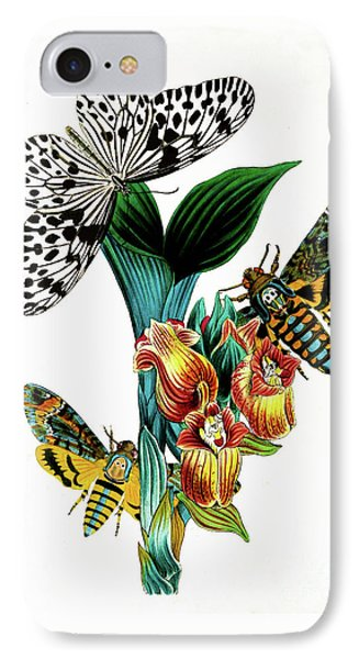 Butterflies, Moths And Orchids, Vintage Botanical Painting IPhone Case by Tina Lavoie