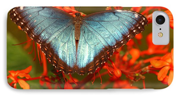 IPhone Case featuring the photograph Butterfly Among The Flowers by Max Allen