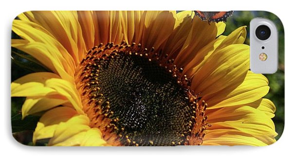 Butterfly And Sunflower IPhone Case by Martina Fagan