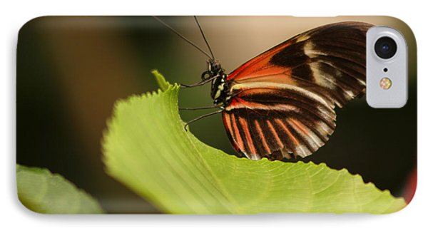 IPhone Case featuring the photograph Butterfly Curling Edge Of Leaf by Max Allen