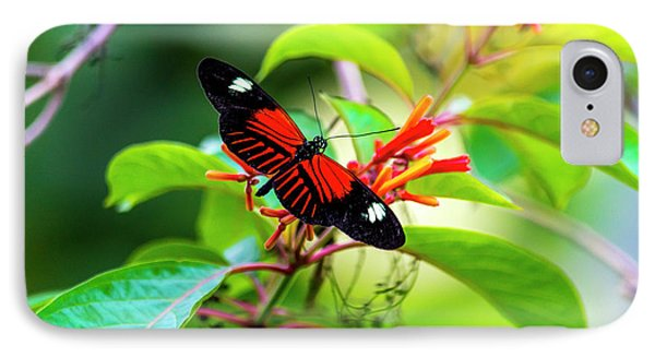 IPhone Case featuring the photograph Butterfly  by David Morefield