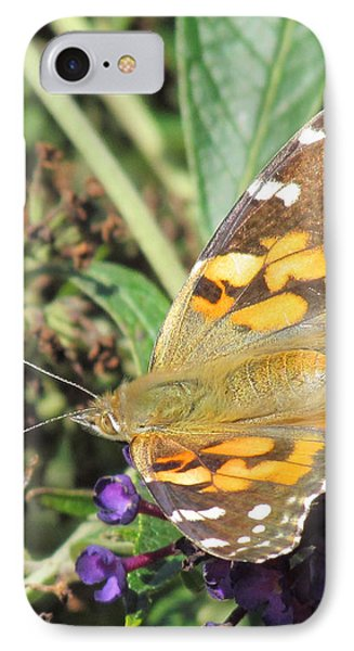 Butterfly Details IPhone Case by Bonnie Muir