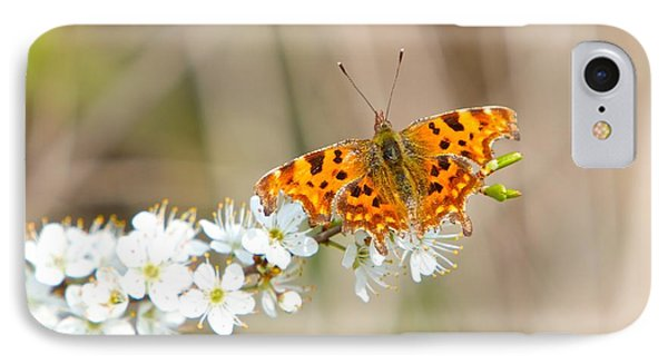Butterfly IPhone Case by Gary Bridger