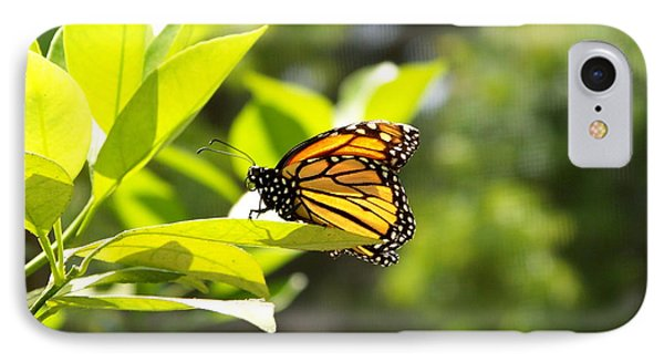 IPhone Case featuring the photograph Butterfly In Sunlight by Carol  Bradley