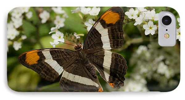 Butterfly In The Garden IPhone Case by Ana V Ramirez