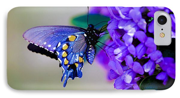 Butterfly On Mountain Laurel IPhone Case by Debbie Karnes