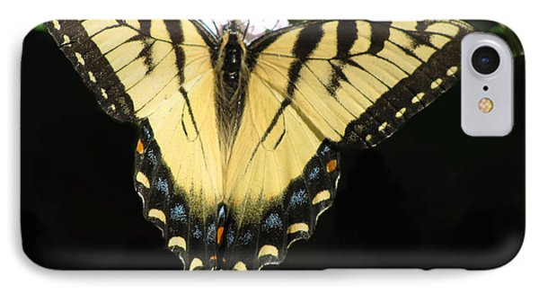 Butterfly Points Phone Case by Debra     Vatalaro