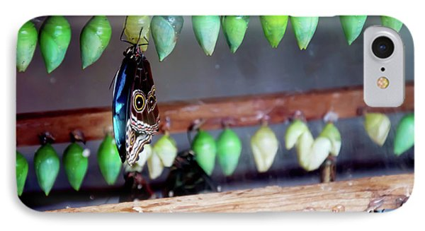 Butterfly With Butterfly Chrysalis 1 Phone Case by Andee Design