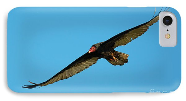 Buzzard Circling IPhone Case by Mike Dawson