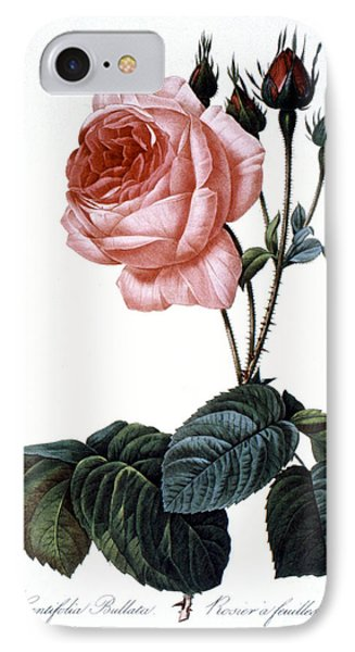 Cabbage Rose Phone Case by Granger