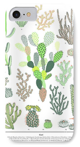 Cacti Varieties IPhone Case by Jacqueline Colley