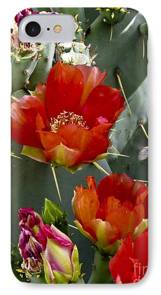 Cactus Blossom IPhone Case by Kathy McClure