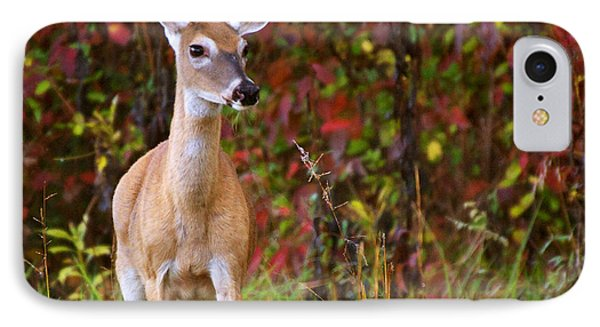 Cades Cove Doe IPhone Case by Bob Decker