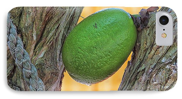 IPhone Case featuring the photograph Calabash Fruit by Bill Barber