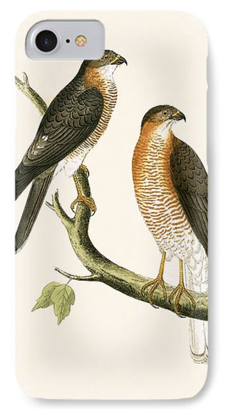 Calcutta Sparrow Hawk IPhone 7 Case by English School