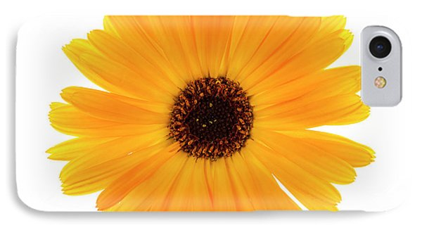 IPhone Case featuring the photograph Calendula Flower by Elena Elisseeva