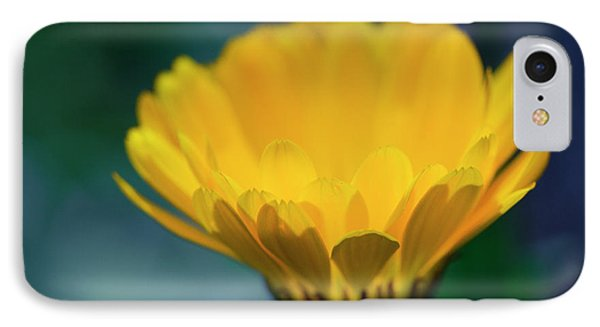 IPhone Case featuring the photograph Calendula by Sharon Mau