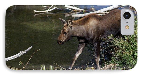 Calf Moose Phone Case by Marty Koch