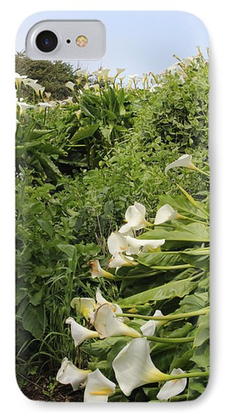 IPhone Case featuring the photograph Cali Can You Hear Me by Marie Neder