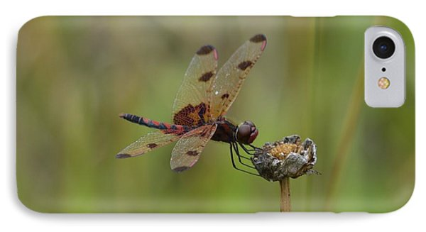 Calico Pennant IPhone Case by Randy Bodkins