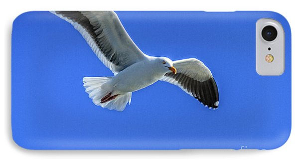 California Gull IPhone Case by Robert Bales
