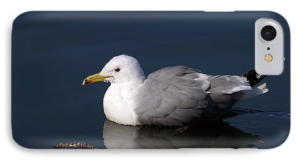IPhone Case featuring the photograph California Gull by Sharon Talson