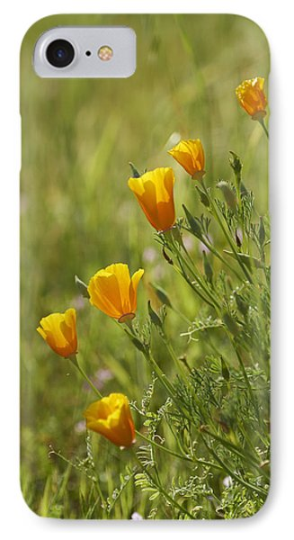 California Poppy Phone Case by Doug Herr