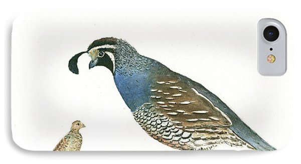 California Quail IPhone Case by Juan Bosco