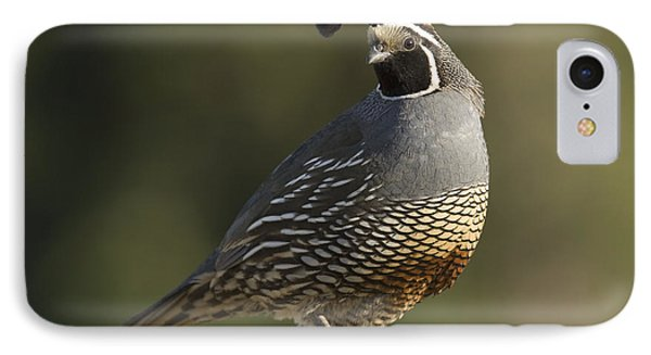 California Quail Male Santa Cruz Phone Case by Sebastian Kennerknecht