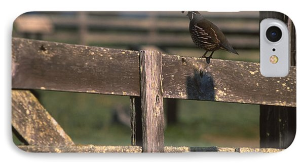 California Quail - Pierce Ranch IPhone Case by Soli Deo Gloria Wilderness And Wildlife Photography