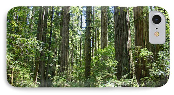 California Redwood Trees Forest Art Prints Phone Case by Baslee Troutman